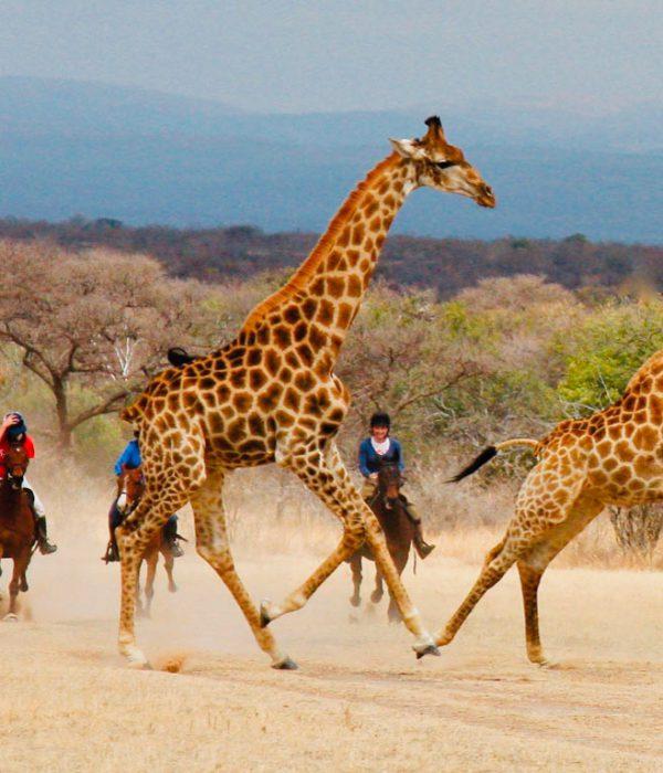 Safaris a Caballo en África
