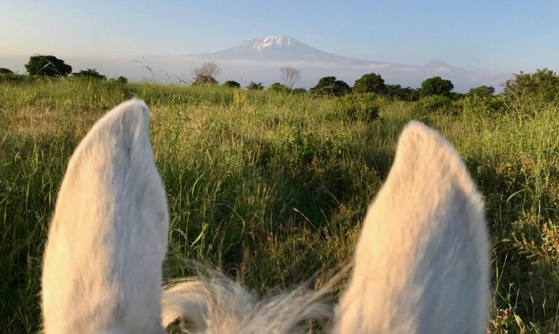 Safaris a Caballo en África, Safari a caballo en Kilimanjaro
