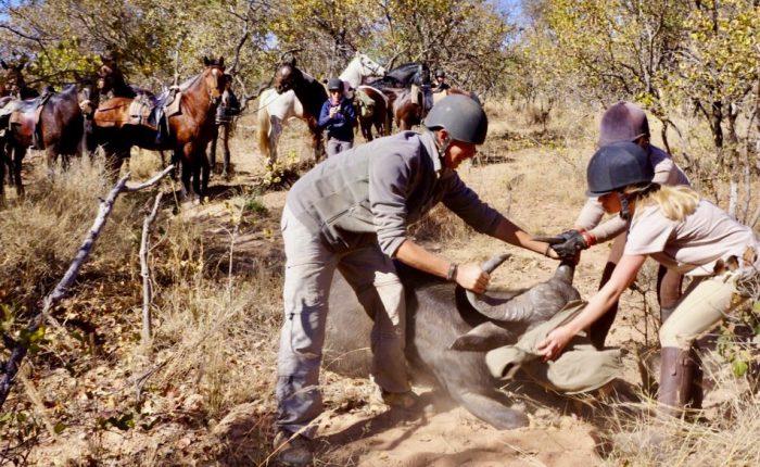 Safaris a Caballo en África. Safari Censo de Vida Silvestre