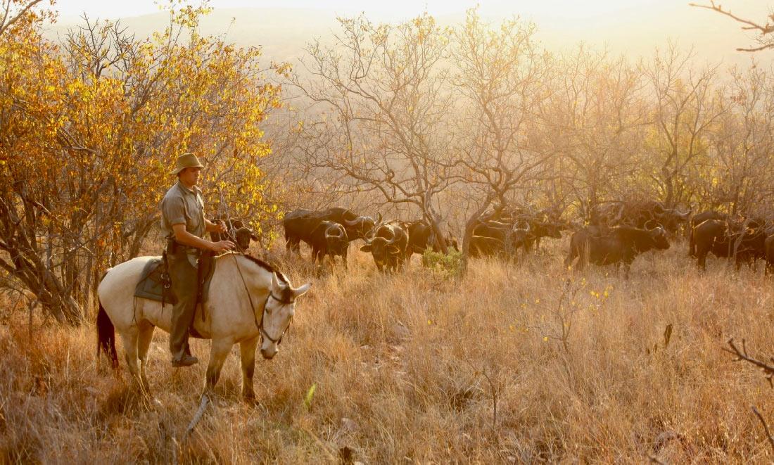 Safari a caballo en Lodge de Lujo