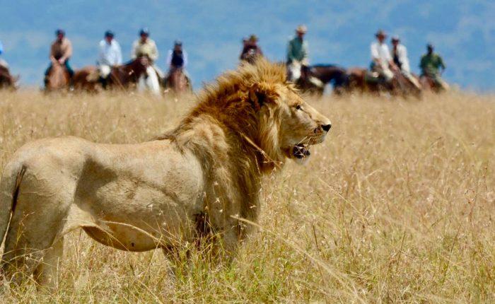 Safaris a caballo en Kenia