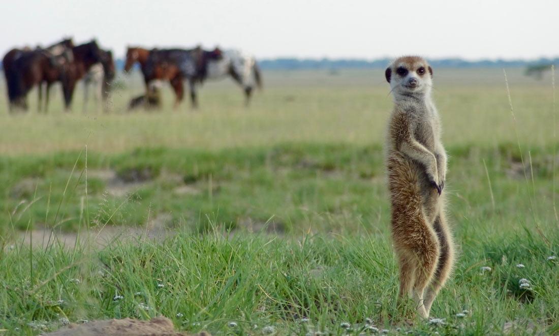 Safari Rutas a Caballo en El Kalahari