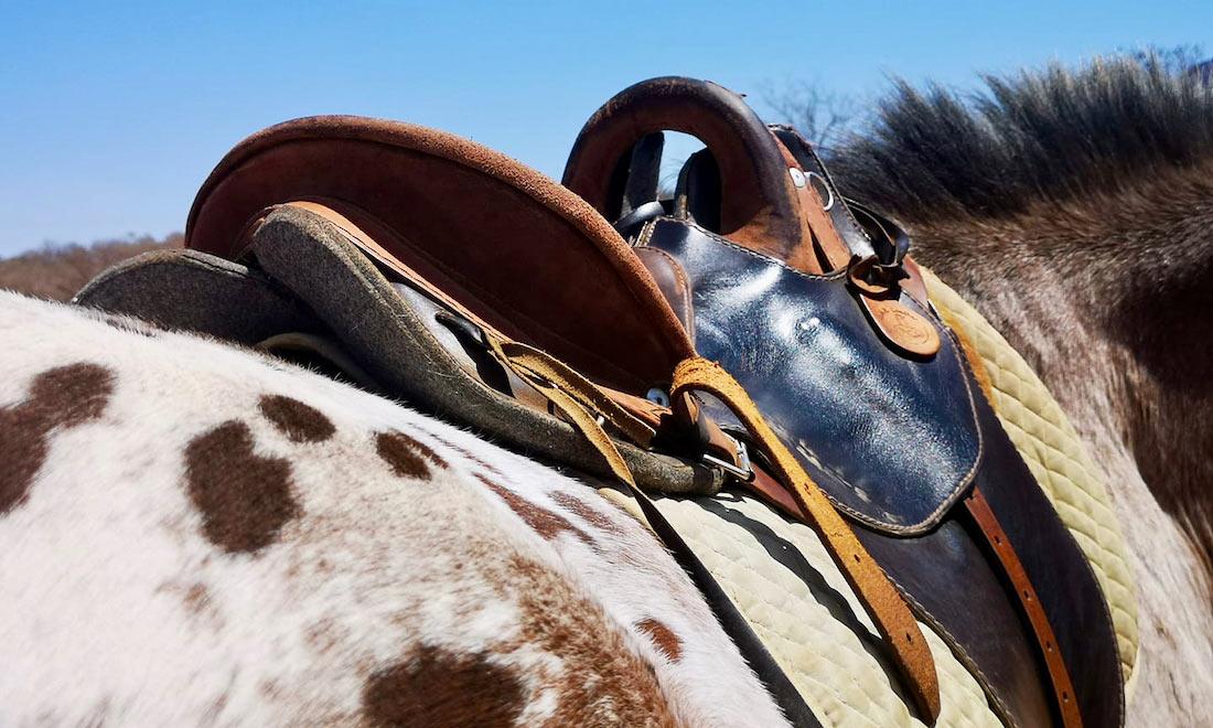 alojamiento Safari a caballo