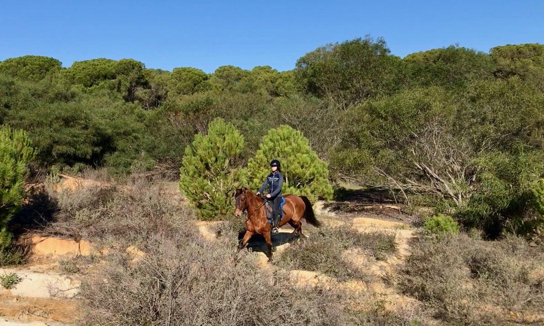 Rutas a Caballo en Doñana